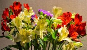 Alstroemeria или конец-вверх перуанской лилии Красный цвет и желтый цвет абстрактный коричневый цвет предпосылки выравнивает изоб Стоковое фото RF
