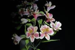 Alstroemeria Цветки от Южной Америки На черной предпосылке стоковая фотография rf