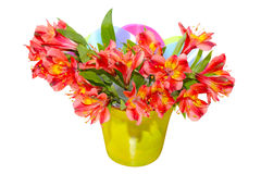Alstroemeria Stock Photos