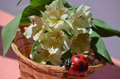 Alstroemeria Стоковые Изображения