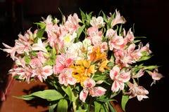 Alstroemeria Royalty-vrije Stock Foto