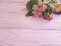 Alstroemeria anniversary on a pink wooden frame background. Alstroemeria a pink wooden frame background anniversary royalty free stock image