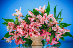 Alstroemeria. Beautiful bouquet of flowers alstroemeria on a blue background stock photos