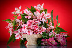 Alstroemeria. Beautiful bouquet of flowers alstroemeria on a red background royalty free stock image