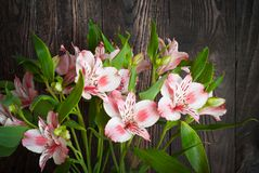 Alstroemeria Stock Photo