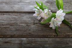 Alstroemeria bianco Immagine Stock