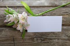 Alstroemeria bianco e cartolina d'auguri Fotografia Stock Libera da Diritti