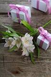 Alstroemeria bianco e regali Fotografia Stock