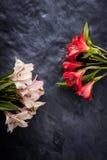 Alstroemeria bianco e rosso sul verticale di pietra scuro del fondo Fotografia Stock