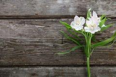 Alstroemeria bianco su un fondo di legno Fotografia Stock