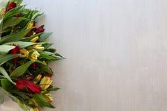 Alstroemeria blüht empfindliche mehrfarbige Leuchtorange und Rot lizenzfreies stockbild