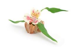Alstroemeria bloom vase. An interior alstroemeria bloom office Royalty Free Stock Photography