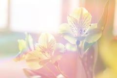 Alstroemeria bouquet Stock Photo
