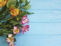 Alstroemeria flower on blue wood birthday summer. Alstroemeria colored  flower on blue wood birthday summer Stock Images