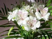 Alstroemeria, comunemente chiamato il giglio peruviano o giglio del in Fotografie Stock