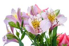 Alstroemeria del fiore su bianco Fotografie Stock Libere da Diritti