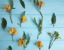 Alstroemeria del fiore su un fondo di legno di colore Fotografia Stock