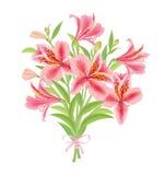 Alstroemeria del ramo stock de ilustración