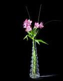 Alstroemeria dentellare in vaso di vetro Immagini Stock Libere da Diritti