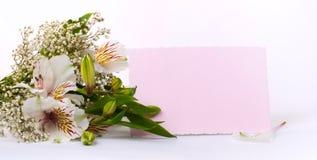 Alstroemeria di bianco del fiore Fotografia Stock Libera da Diritti