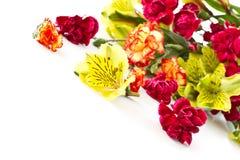 Alstroemeria e garofani rossi Fotografie Stock