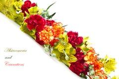 Alstroemeria e garofani rossi Fotografia Stock Libera da Diritti