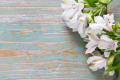 Alstroemeria flower commonly called the Peruvian lily or lily of Stock Photography