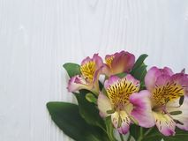 Alstroemeria flower romance on a white decorated bloom bouquet wooden background. Alstroemeria flower natureon a white wooden background decorated bouquet bloom Royalty Free Stock Photos