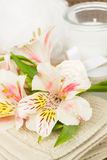 Alstroemeria flower with spa accessories Royalty Free Stock Images