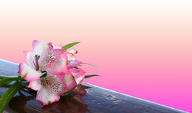 Free Alstroemeria Flower With Pink Background. Royalty Free Stock Photos - 87395278