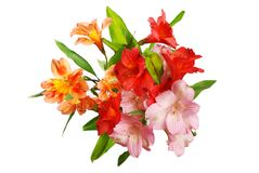 Alstroemeria flowers Royalty Free Stock Photography