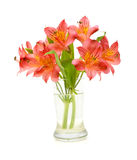 Alstroemeria flowers. Bouquet of alstroemeria flowers isolated in glass vase on white background royalty free stock photography