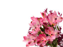 Alstroemeria flowers Stock Photos