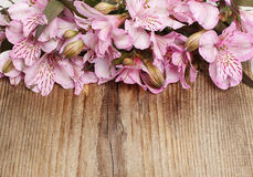 Alstroemeria flowers (Peruvian lily or Lily of the Incas) on woo Stock Images