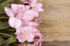 Alstroemeria flowers (Peruvian lily or Lily of the Incas) Royalty Free Stock Photos