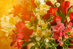 Alstroemeria flowers. Sunlight. royalty free stock images