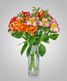 Alstroemeria flowers in a vase Stock Photography