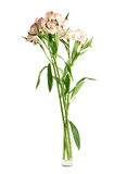 Alstroemeria flowers in a vase. Composition isolated over the white background stock photography