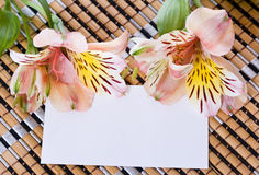 Alstroemeria flowers with a white card Royalty Free Stock Image