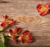 Alstroemeria flowers on  wooden background Royalty Free Stock Images
