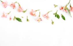Alstroemeria, foglie e petali su fondo bianco Fotografie Stock Libere da Diritti