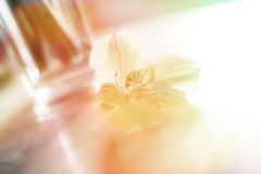 Alstroemeria giallo, Fotografie Stock