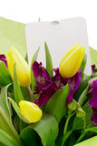 Alstroemeria kwiat obrazy stock