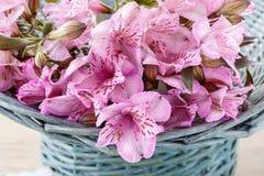 Alstroemeria kwiat powszechnie dzwonił Peruwiańskiej lelui lub lelui Zdjęcia Stock