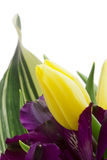 alstroemeria kwiaty zdjęcie royalty free