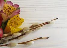 alstroemeria lanuginoso del salice su un fondo di legno bianco Fotografia Stock
