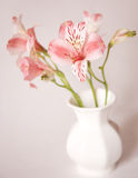 Alstroemeria lily flowers in vase Stock Images