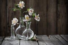 Alstroemeria in navi di vetro su fondo di legno scuro Fotografia Stock