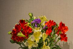 Alstroemeria or Peruvian lily close-up. Red and yellow. Brown background.  royalty free stock photos