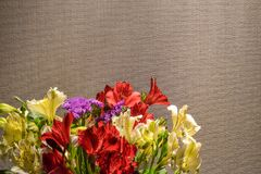 Alstroemeria or Peruvian lily close-up. Red and yellow. Brown background.  royalty free stock image